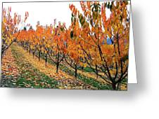Fall Cherry Orchard Greeting Card