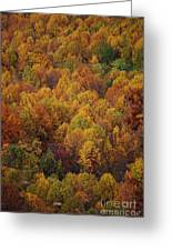Fall Cluster Greeting Card