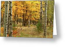 Fall Color 12 Greeting Card