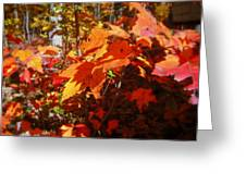 Fall Color 2 Greeting Card