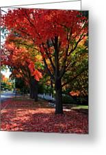 Fall Color 2010 No 5 Greeting Card