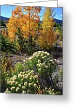 Fall Color Comes To Dillon Reservoir Greeting Card