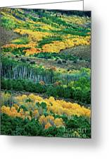 Fall Color In The Eastern Sierras California Greeting Card