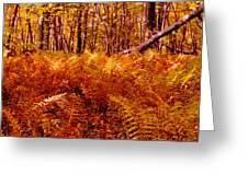 Fall Color In The Woods Greeting Card