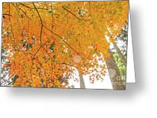 Fall Color Maple Leaves At The Forest In Aichi, Nagoya, Japan Greeting Card