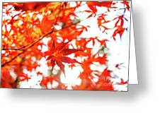Fall Color Maple Leaves At The Forest In Kochi, Japan Greeting Card