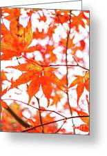 Fall Color Maple Leaves At The Forest In Kumamoto, Japan Greeting Card