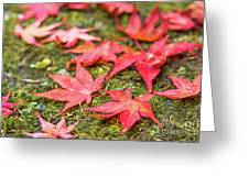 Fall Color Maple Leaves At The Forest In Nikko, Tochigi, Japan Greeting Card