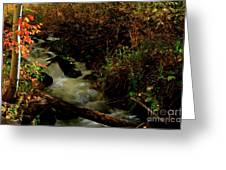 Fall Color Stream Greeting Card