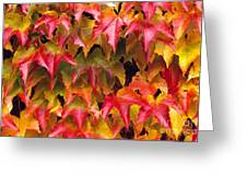 Fall Colored Ivy Greeting Card
