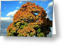 Fall Colors 19 Greeting Card