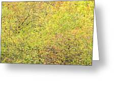 Fall Colors - Abstract Greeting Card