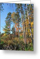 Fall Colors Along The Norway Beach Loop Greeting Card