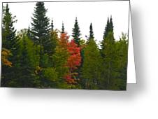 Fall Colors Are Starting Greeting Card