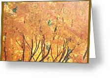 Fall Colors At Cape May Greeting Card