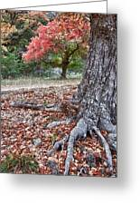 Fall Colors At Lost Maples Greeting Card