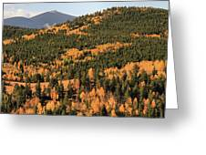 Fall Colors At Rocky Mountain National Park Greeting Card