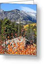 Fall Colors In Rocky Mountain National Park Greeting Card