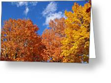 Fall Colors In Spokane Greeting Card