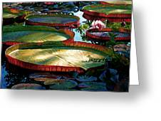 Fall Colors In The Morning Sun Greeting Card