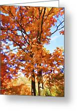 Fall Colors Looking Awesome Greeting Card