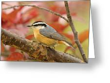 Fall Colors Nuthatch Greeting Card