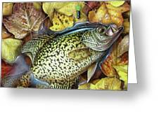Fall Crappie Greeting Card