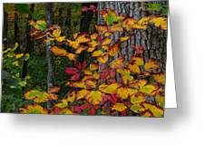 Fall Decorating Greeting Card