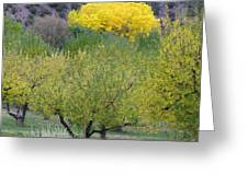 Bright Yellow Leaves, Dixon New Mexico Greeting Card