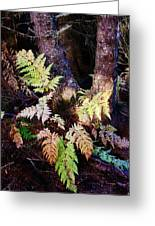Fall Ferns Greeting Card