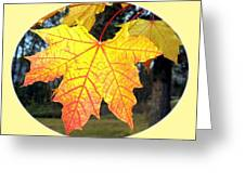 Fall Finery 2 Greeting Card