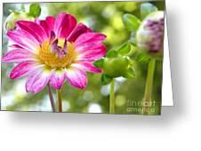 Fall Flower Garden Greeting Card
