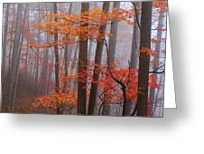 Fall Fog. Greeting Card