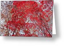 Fall Foilage Greeting Card