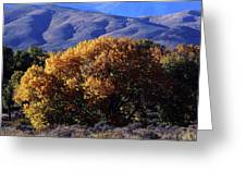 Fall Foliage And Hills, Carson City Greeting Card