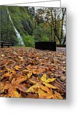 Fall Foliage At Horsetail Falls Greeting Card