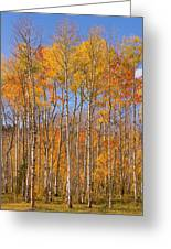 Fall Foliage Color Vertical Image Greeting Card