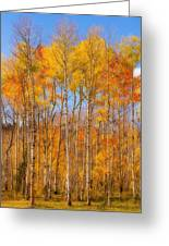 Fall Foliage Color Vertical Image Orton Greeting Card