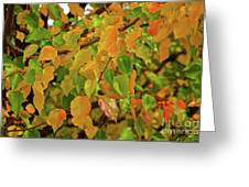 Fall Foliage II Greeting Card