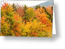 Fall Foliage In The Mountains Greeting Card