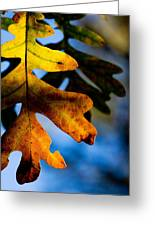 Fall Foliage Leaf Near Ruidoso Nm Greeting Card
