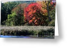 Fall Foliage Marsh Greeting Card