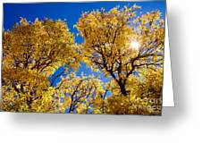 Fall Foliage Near Ruidoso Nm Greeting Card