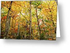 Fall Foliage On The Hike Up Mount Monadnock New Hampshire Greeting Card