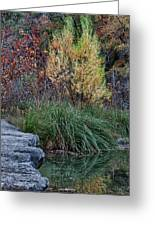 Fall Foliage Reflections At Lost Maples Greeting Card