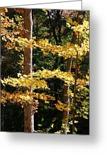 Fall Forest 1 Greeting Card