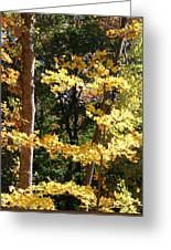 Fall Forest 3 Greeting Card