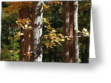 Fall Forest 4 Greeting Card