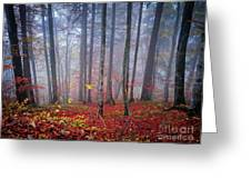 Fall Forest In Fog Greeting Card
