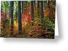 Fall Forest Splendor Greeting Card